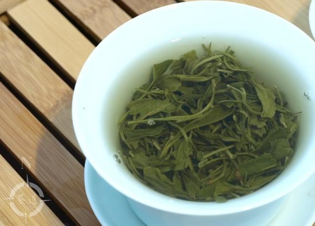 Maojian leaves infusing in a gaiwan