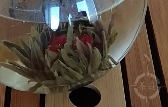 The flowering tea starting to open...