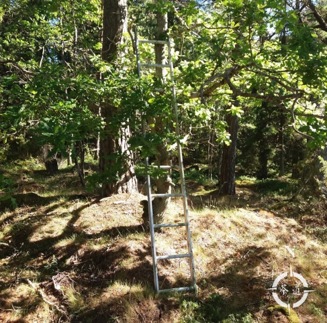 cat ladder tree