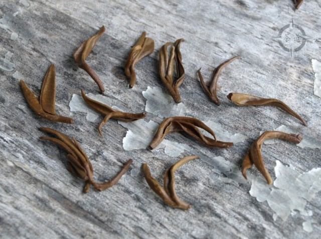 Yunnan Pure Bud Golden Snail - used leaves