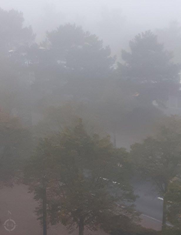 forever autumn - a foggy morn