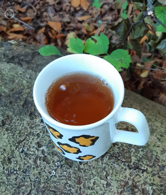 Tallriken - cup