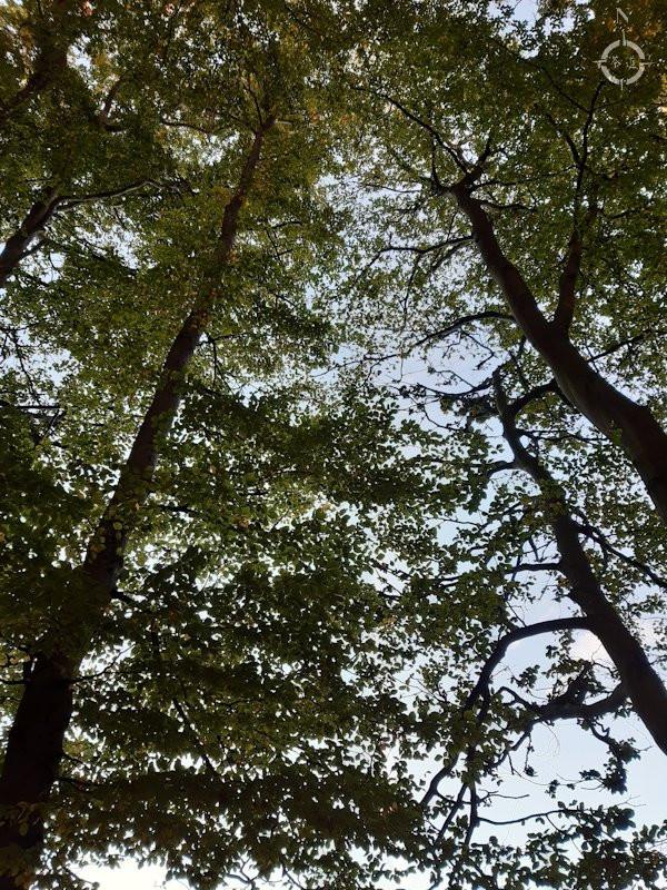 Tallriken - trees